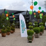 Village Nurseries entrance balloons