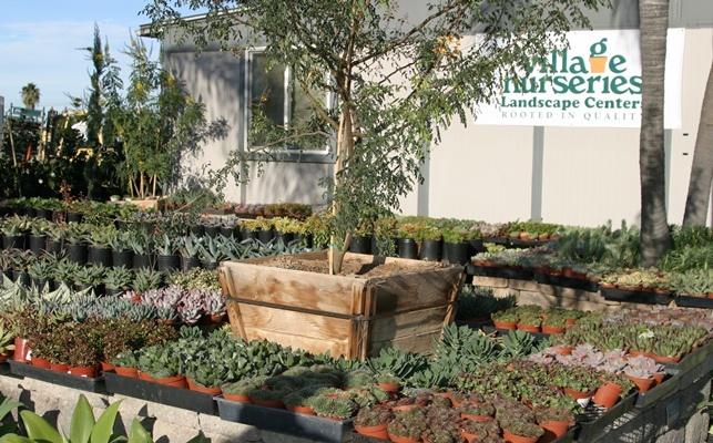 Landscape Center San Diego Landscape Center