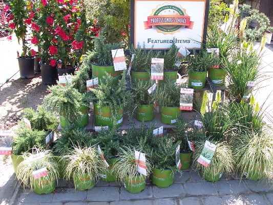 Village Nurseries Landscape Center Huntington Beach Ca