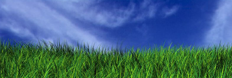 grass-image
