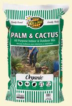 PALM & CACTUS