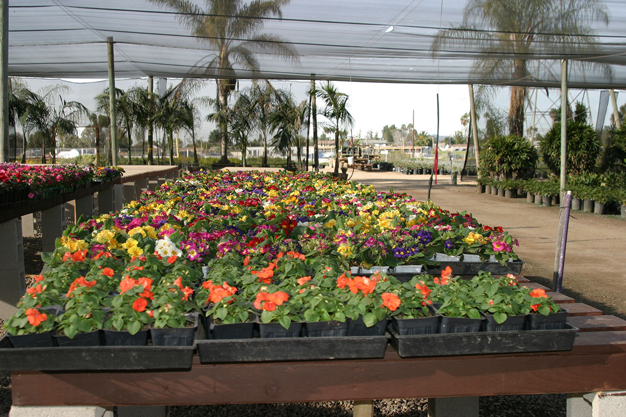 Village Nurseries Landscaping Centers & Wholesale Nursery