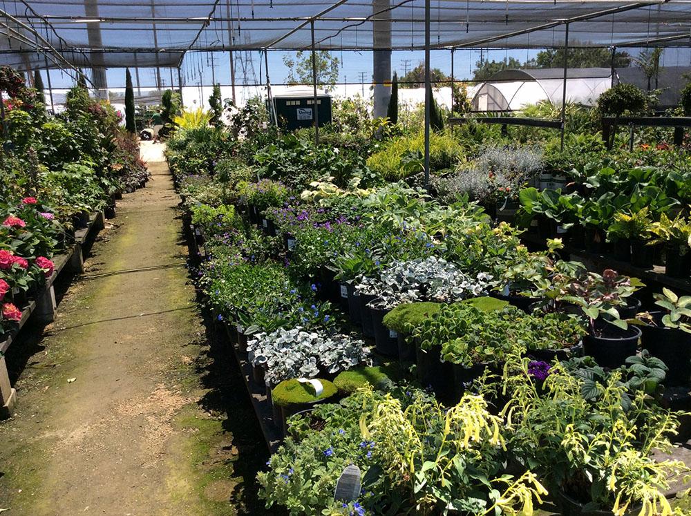 Village Nurseries Landscaping Centers