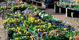 Village Nurseries Landscape Centers In The Orange County San Go And Sacramento Areas Offer Professionals Quality Service Selection