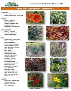 Drought Tolerant Discovery