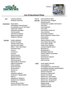 Clay Tolerant Plant List