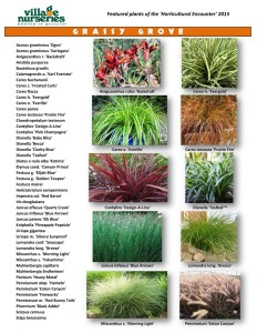 Grassy Grove San Diego